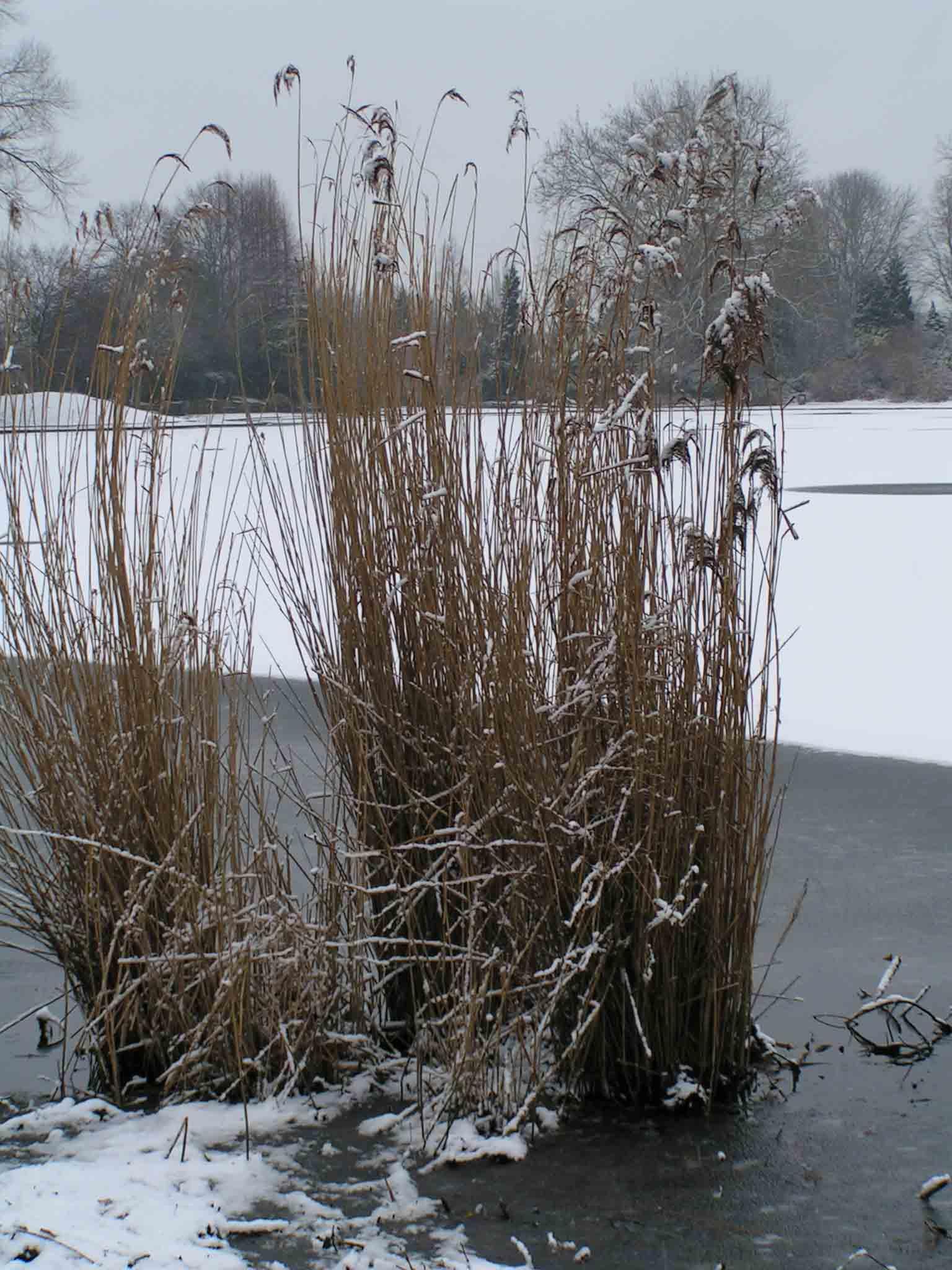 Snow Scenes in Alvaston Park